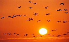 Νikolas: Εναέρια «χορογραφία» από πουλιά  (video)