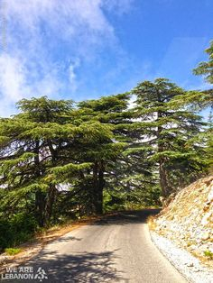 The #Cedars‬ , Lebanon  THE LIBYAN Esther Kofod www.estherkofod.com