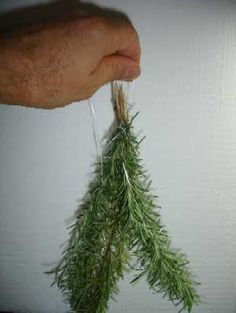 How to dry sage, thyme, summer savory, dill, bay leaves, oregano, rosemary or marjoram - From fresh garden plants!