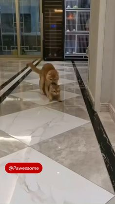 Super Cute Animals, Cute Funny Animals, Funny Cute, Cute Cats And Kittens, Kittens Cutest, Pet Paws, Cute Cat Gif, Animal Jokes, Pretty Cats