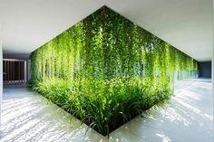 jardin-vertical--verre-plantes-allee
