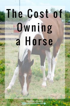 The Cost Of Owning A Horse via Hoofbeats and Ink