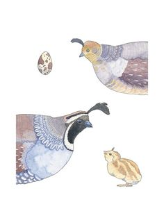 The Quail Family Limited Edition Art Print by Natalie Groves | Minted