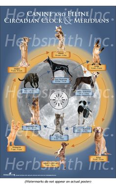 Circadian Rhythm Chart TCVM made easy Beautiful Posters, Veterinary Medicine, Reiki, Pug, Clinic, Anatomy, Grass, Dog Cat, Literature