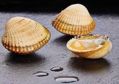 BERBERECHO GORDO -  Exquisito berberecho gordo traído directamente de las lonjas gallegas. Su sencilla forma de cocinar al vapor aderezado con limón es una estupenda forma de disfrutar su intenso sabor. El envase es una malla de 2 kg aproximado.  Consulte como congelar los berberechos en consejos del chef.