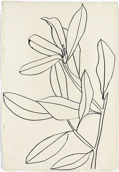"Ellsworth Kelly Casts His Cold Eye on Art Market, Peers ""Leaves, Ile St. Louis"" by Ellsworth Kelly. The artist collects drawings by greats such as Matisse and Picasso. Ellsworth Kelly, Botanical Illustration, Illustration Art, Illustrations, Botanical Line Drawing, Plant Drawing, Painting & Drawing, Drawing Flowers, Flower Drawings"
