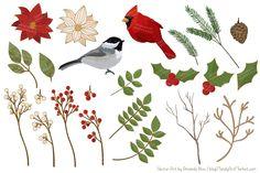 Christmas Birds & Flowers Vectors by Amanda Ilkov on @creativemarket