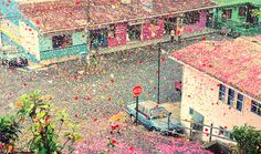 8 million flower petals flooded the streets of a town in Costa Rica - Lost At E Minor: For creative people