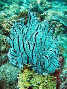 Koh Bon    Azul turquesa Reef