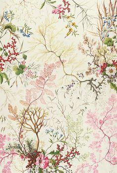 Seaweed design for silk material by William Kilburn