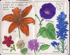 Sketching in Nature: flowers