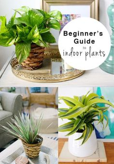 6 Plants That Are (Almost) Impossible To Kill |  These plants are great for beginners or brown thumbs because they are low-maintenance and easy to grow, plus they are all under $5 so it's not a big investment. You will have beautiful lush plants in your home in no time!
