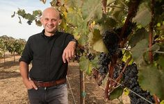 Genomics Breakthrough To Help Wine Growers
