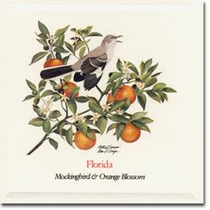 Orange Blossom and Mockingbird - Old Florida