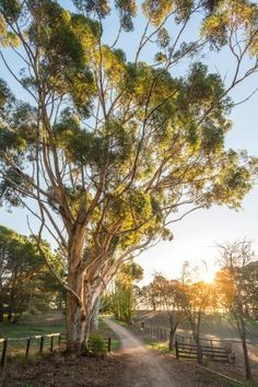 Australia Landscape, Australian Bush, Scene Image, Light Images, Morning Light, Layout, Countryside, Beautiful Places, Scenery