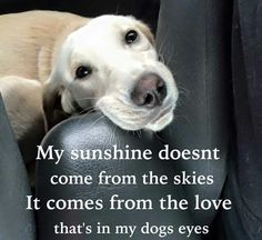 You are my sunshine  #dog #dogquotes #inspiration  http://www.nojigoji.com.au/