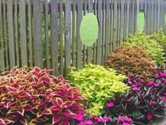 Flashy Leaves - Enjoy Color in the Garden All Summer on HGTV