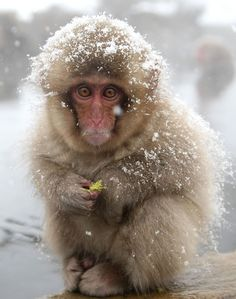 I just want to give this little guy a blanket and some warm socks