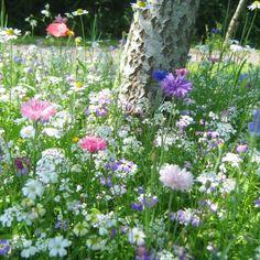Dwarf Variety Floral Meadow Seeds - Tree Foot