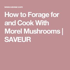 How to Forage for and Cook With Morel Mushrooms | SAVEUR