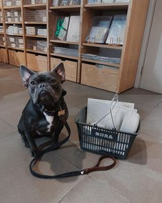 "Océan Johnson's Instagram profile post: ""Went shopping with Mum in London😍 -  #frenchie #frenchbulldog #frenchiesofinstagram #wainwrights #bulldoglife #frenchie1 #frenchielove…"" Plastic Laundry Basket, French Bulldog, My Photos, Profile, Ocean, London, Shopping, Instagram, User Profile"