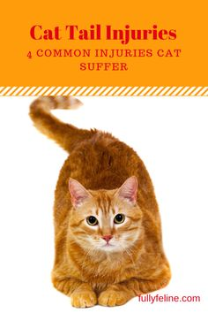 Cat tail injuries do happen.  Find out more about common injuries and whether they normally require vet visits. #cats #catcare