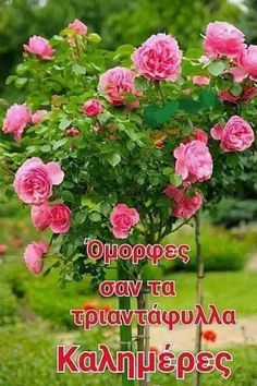 True Words, Good Morning, Spirituality, Plants, Quotes, Beautiful, Buen Dia, Quotations, Bonjour
