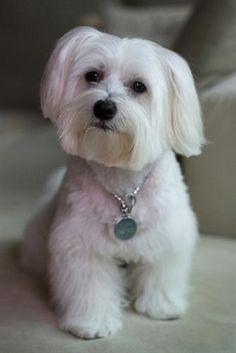 Amazing Haircuts  Cute Poodle Haircuts  Cute Yorkie Haircuts  Cute Dog