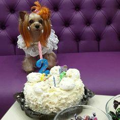 День рождения зоосалона