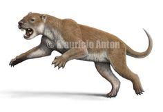 Thylacoleo by Mauricio Anton.