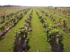 Threefold Vine Winery, open for tours/ tasting, Garden, MI