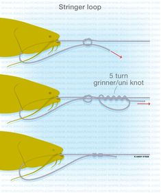 Stringer loop #fishing #fishingknot #fishingtip