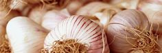 Aglio di Vessalico - Presìdi Slow Food #Liguria