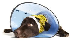 About Dog Neck Cones. DIY cone/E collar to stop licking wound. Thick cardboard, rolled into a large cone and placed around your dog's neck. Cut hole in the bottom of a suitably sized plastic bowl/bucket.