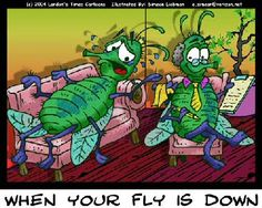 Drosophila fruit fly humor