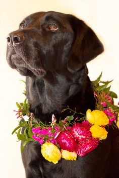 floral dog wreath