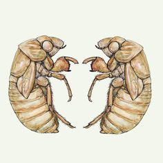 Joe MacGown: Painting of periodical cicada  nymphs-ink & watercolor on clayboard