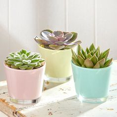 Glass accessories, particularly plant pots and candle holders are great ways to add colour and light to your home decor. Love these pastel plant pot holders and cute succulents!