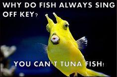 Why do fish always sing off key?