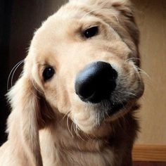 Mejores 92 Imagenes De Fotos Husk En Pinterest En 2018 Mascotas