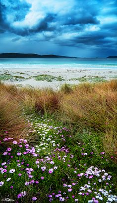 Spring at Middleton Beach - Albany, Western Australia. Middleton Beach provides an easy accessible for viewing Humpback Whales during their annual migration to the Southern Ocean. Felder, Australia Travel, Australia Tours, Places Around The World, Photos, Pictures, Brisbane, Perth, Beautiful Beaches
