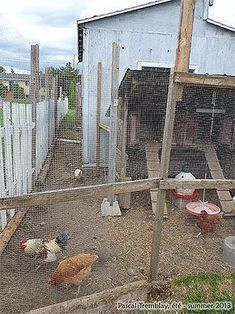 Coops Aviaries - DIY Chicken Aviary - Chicken run - Build outdoor aviary #howtobuildanaviary #buildaviary #aviariesdiy