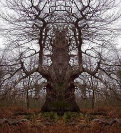 This tree could be scarey at night time.