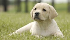 We look at the most common puppy potty training problems, and how to resolve each one so that your puppy learns to be clean indoors!