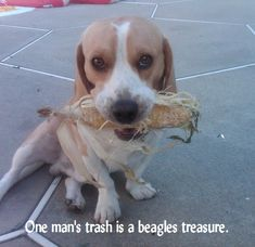 True! They stick their noses in everything! Better yet if they can eat it before their owners figure out they have something!