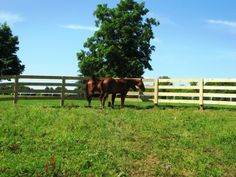 120 Best Horse Fence Images In 2018 Equestrian Fencing