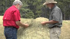 Georgia hay producers strive to provide the industry with high quality hay so livestock can thrive, but there are many factors that go into growing quality forage.  The Monitor's Mark Wildman recently visited with one Tift County hay producer and he has this report.