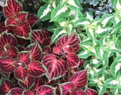Plants for Pool Landscaping | eHow