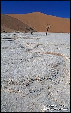 Photograph of Acacia Trees in the surreal landscape of the Namib Desert, Sossusvlei, Namibia Places Ive Been, Places To Go, Deserts Of The World, Desert Photography, Namib Desert, West Africa, Continents, Surrealism, The Good Place