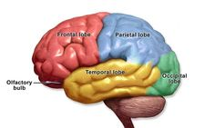 What is Psychology's Single Most Brilliant Discovery? | Psychology Today